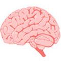 Недостаток витамина D может навредить головному мозгу