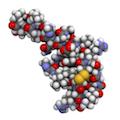 Исследование подтвердило, что нарколепсия является аутоиммунным заболеванием
