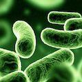 Здоровые кишечные бактерии помогают снять стресс