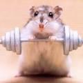 Наночастицы вылечили мышечную дистрофию у мышей